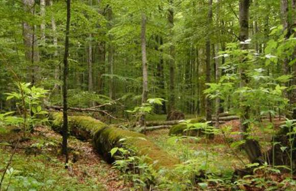 Naturwaldreservate